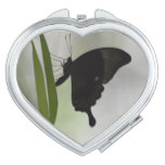 Black Swallowtail Makeup Mirror