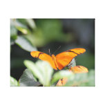 Brilliant Orange Butterfly Canvas Print