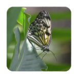 Butterfly Beauty Beverage Coaster