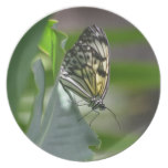 Butterfly Beauty Melamine Plate