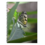 Butterfly Beauty Notebook