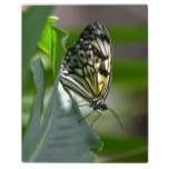 Butterfly Beauty Plaque
