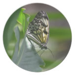 Butterfly Beauty Plate