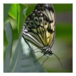 Butterfly Beauty Poster