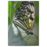 Butterfly Beauty Post-it Notes