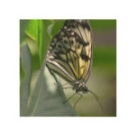 Butterfly Beauty Wood Wall Art