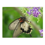 Butterfly Pollinating Postcard