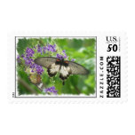 Legend of Buterflies Postage Stamp