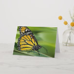Monarch Butterfly Design Greeting Card