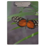 Natural Butterfly Clipboard