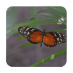 Natural Butterfly Coaster