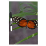 Natural Butterfly Dry Erase Board
