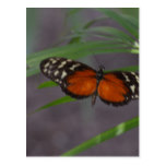 Natural Butterfly Postcard