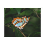 Perfect Camoflage Butterfly Wings Canvas Print