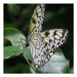 White and Black Butterfly Print