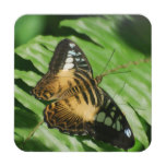 Winged Butterfly Coaster