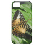 Winged Butterfly Cover For iPhone 5C