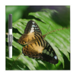 Winged Butterfly Dry-Erase Board