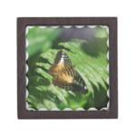 Winged Butterfly Keepsake Box