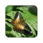 Winged Butterfly Square Sticker
