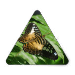 Winged Butterfly Triangle Sticker